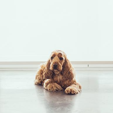 Dog Victoria Agency